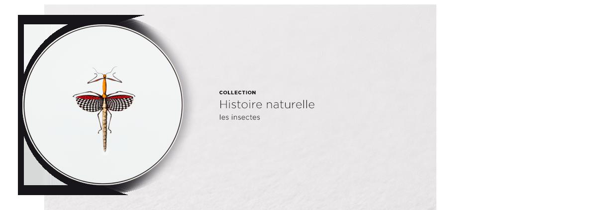 ACCORDEON-Histoire-naturelle-1210x423